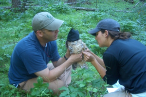 Hover to pause, click to view — Scientists Study Endangered Mexican Spotted Owl