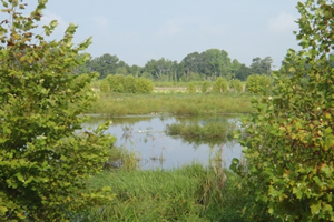 Hover to pause, click to view — Wetlands Assessment Project Documents Outcomes of Conservation on Working Lands