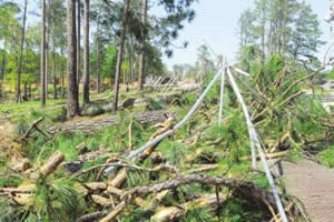 Hover to pause, click to view — Restoration Treatments for the Post-Hurricane Recovery of Longleaf Pine