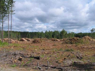 Hover to pause, click to view — Ecosystem Impacts of Wood Harvests For Biofuel