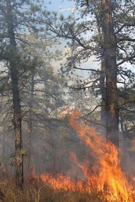 Hover to pause, click to view — Scientists Study Fire Management and Carbon Sequestration in Forests