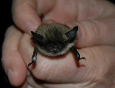 Hover to pause, click to view — Protecting Habitat for Bats in the Face of Development Pressure