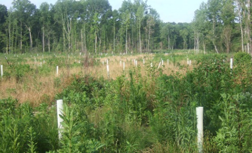 Hover to pause, click to view — Landowners Interested in Managing Family Forest Lands for Carbon