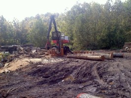 Click to view — Hardwood Log Procurement and the Role of Log Brokers