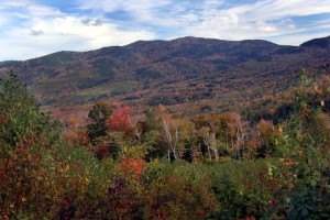 Hover to pause, click to view — Silvicultural Guide for Northern Hardwoods in the Northeast Updated