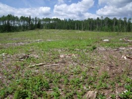 Click to view — Ecological Limits to Biomass Harvesting