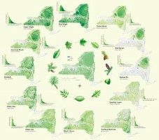 Click to view — Nationwide Datasets of Tree Species Distributions Created