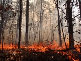 Hover to pause, click to view — Contrasting Effects of Invasive Insects and Fire on Forest Carbon Dynamics