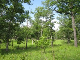 Hover to pause, click to view — Many Bird Species Benefit From Oak Savanna Woodland Restoration