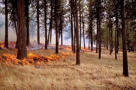 Hover to pause, click to view — Pros and Cons of Fuel Treatments Versus Periodic Wildfire Determined