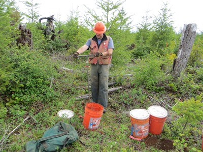 Hover to pause, click to view — Some Logging Debris Cover Boosts Growth of Douglas-fir Seedlings on Low-nutrient Site