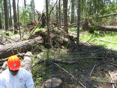 Hover to pause, click to view — Scientists Study Salvage Logging After a Major Windstorm