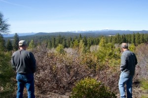 Click to view — Nonindustrial Private Forestland Owners Consider Fuel Conditions and Past Wildfire Occurrence in Their Risk Mitigation Decisions