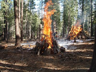 Hover to pause, click to view — Scientists Study the Effects of Pile Burning in the Lake Tahoe Basin