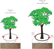 Click to view — Soil Carbon Storage in Tropical Montane Forests is Insensitive to Warming