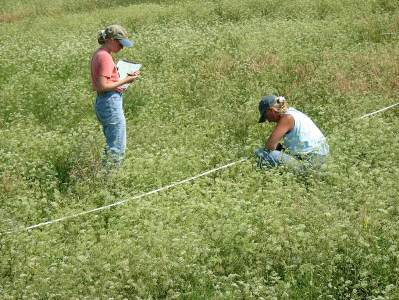 Hover to pause, click to view — Investigating New Emerging Invasive Plant Threats