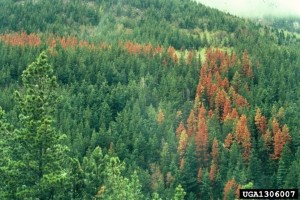 Hover to pause, click to view — A 25-Year History of Forest Disturbance and Cause in the United States