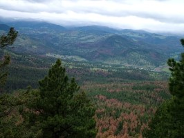 Click to view — Combined Effects of a Changing Climate Drive Mountain Pine Beetle Outbreaks