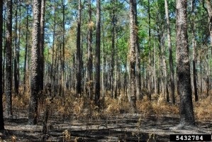 Click to view — Tailoring Prescribed Fire for the Private Landowner