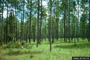 Hover to pause, click to view — A Roadmap to Recovery for Degraded Longleaf Pine Plant Communities
