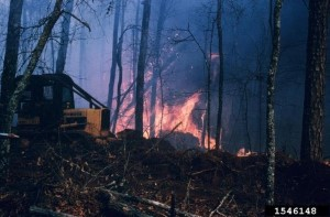 Click to view — Assessment of the Interaction of Climate Change, Fire, and Forests in the U.S. Published