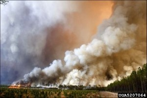 Hover to pause, click to view — Why Have smoking-caused wildfires declined in frequency