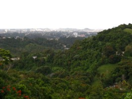 Hover to pause, click to view — Highly Dynamic Urban Forest in San Juan, Puerto Rico.