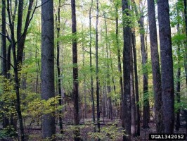 Hover to pause, click to view — Forests Important in Mitigating Heat-related Mortality
