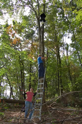 Trap to Detect Asian Longhorned Beetles