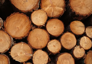 link to Forest Products
