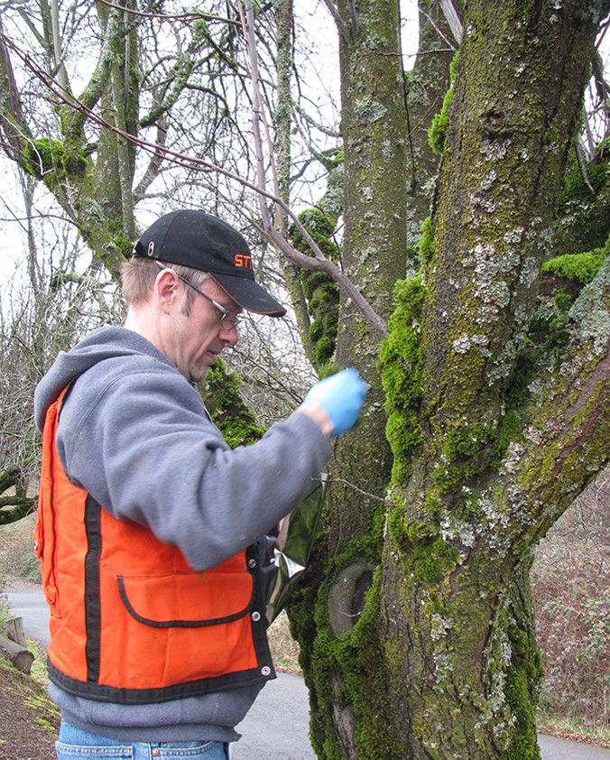 Geoffrey Donovan collects moss samples in Portland, OR