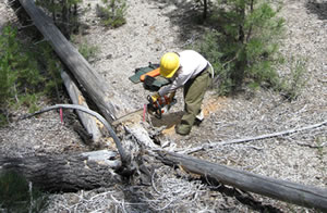 Sampling tree rings to reconstruct historical fire regimes