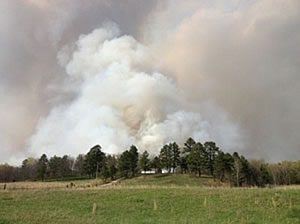 Smoke rising above the forest from the prescribed fire of the Handy burn area.