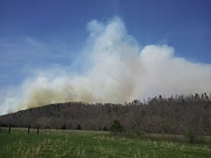 Smoke rising above the forest from the prescribed fire of the Pine Knot burn area.