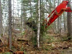 Picture of mechanical clipper equipment cutting small trees in a forest stand.