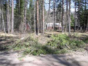 Picture of the results of thinning the trees around a house displaying greater spacing between trees and limbs on the ground.