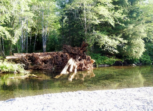 Large wood structure in the Harris River.