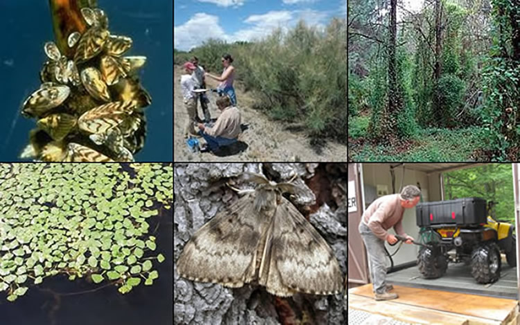 Six invasive species images: zebra mussels, researchers and tamarisk, kudzu growing in a pine forest, aquatic weeds, gypsy moth, and man cleaning an ATV after use to wash off potential invasive plants seeds.