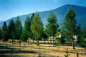 International Larix Arboretum in Hungry Horse, MT