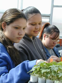 Students at the Moencopi School in Tuba City, Arizona, work with native plants