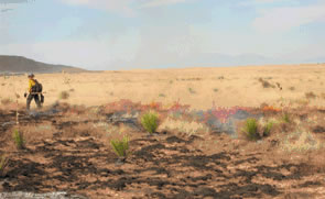 Shrub Encroachment Fire Climate Change And Carbon Sequestration