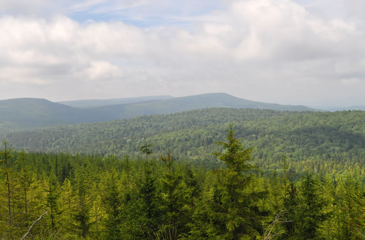 A landscape view of the mountains and forest of the Monongahela National Forest.