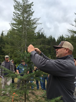 Quinault Tree Farm demonstration.