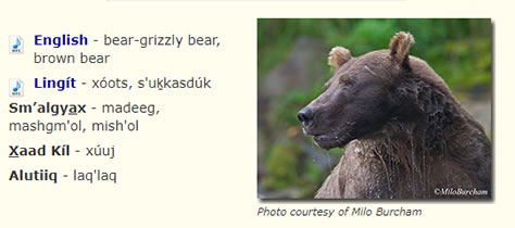 Alaska brown bear names with picture of bear.