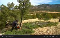 Opening scene from Cutting Edge Jobs, tribal members cutting small trees.