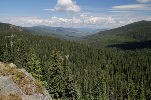 View from the Pacific Northwest National Scenic Trail at Canuck Pass near the Idaho-Montana border.