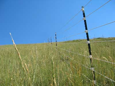 photo of a 6foottall polyrope electric fence that has metal t