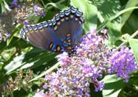 butterfly on flowers.