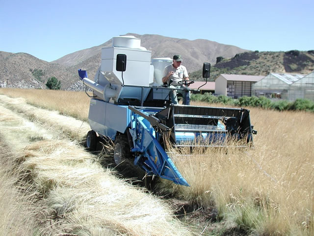 combine collecting seed in a nursery.