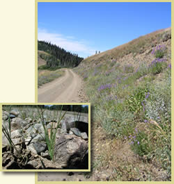 Two overlaid pictures: foreground is closeup of grasses growing along a roadside, and background is a forest road with wildflowers growing on its cutbank.